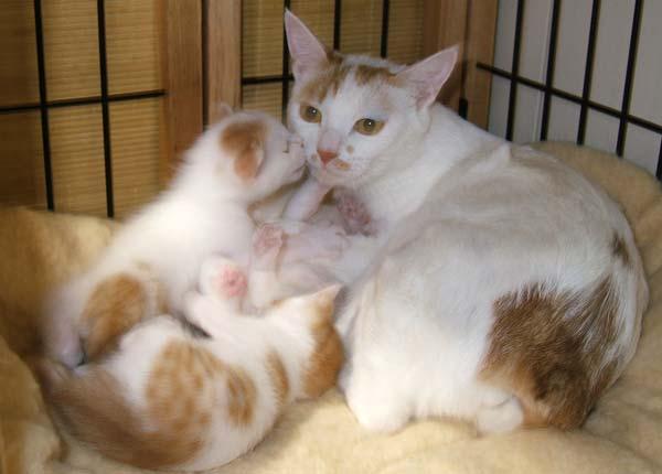 Temari-kittens0514.jpg