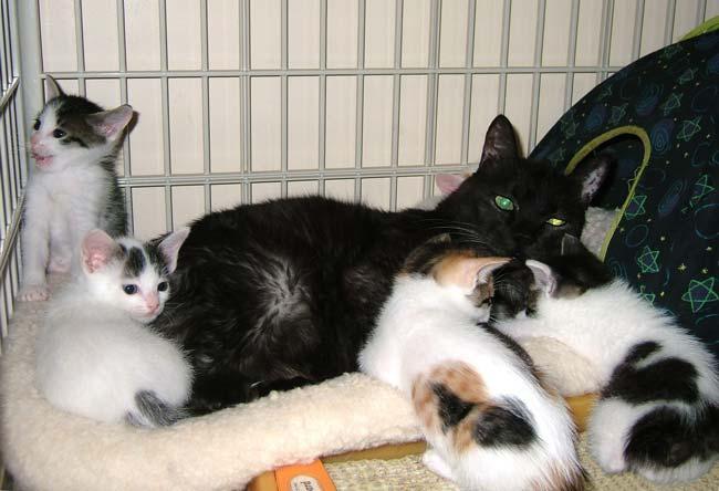 Noah-kittens0520.jpg
