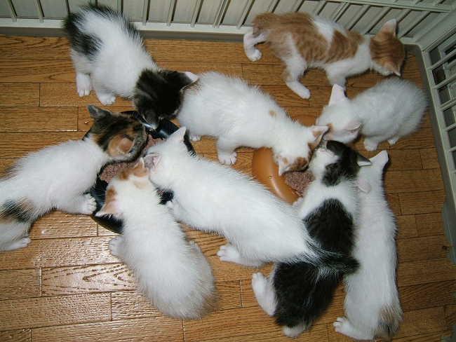 Kittens0523.jpg