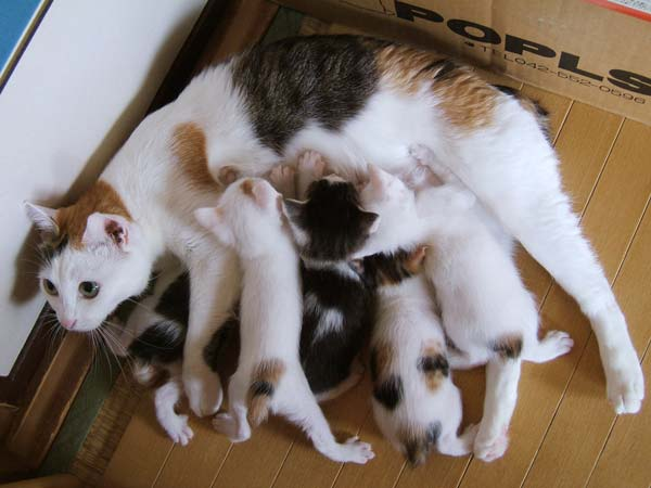 Akari-kittens0514.jpg