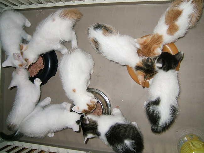 Kittens0602.jpg