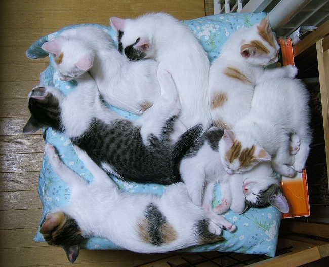 kittens0620-4.jpg