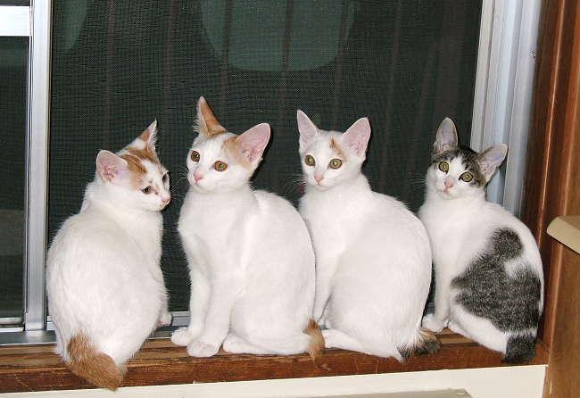 Kittens0728-1.jpg