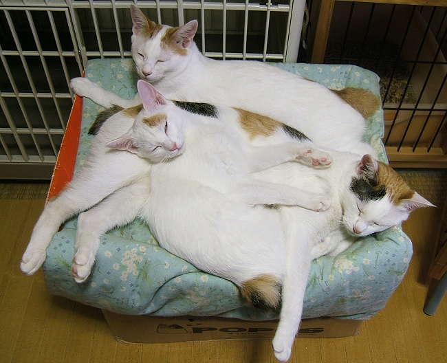 Kittens-Akari0917.jpg