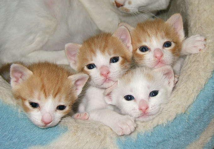T-kittens0305-1.jpg