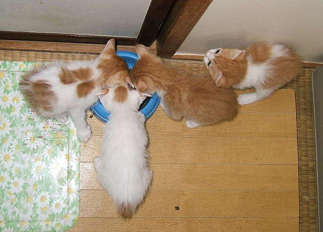 T-kittens0321.jpg