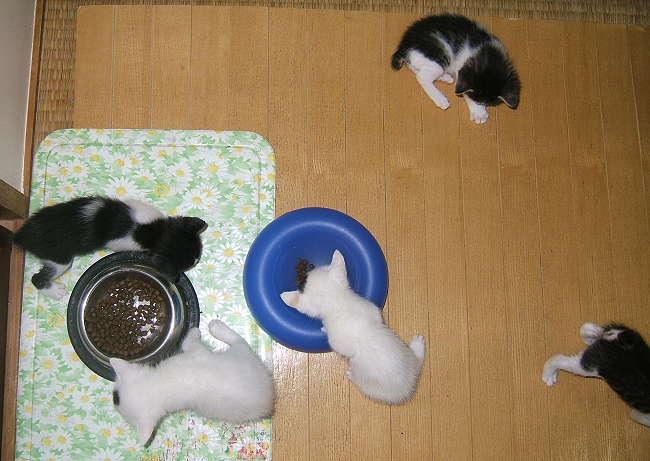 A-kittens0329.jpg