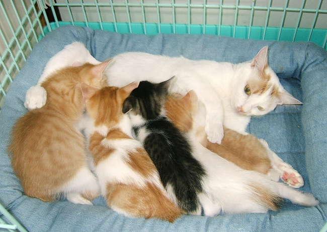 Temari-kittens0414.jpg