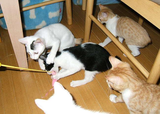 kittens0530-2.jpg