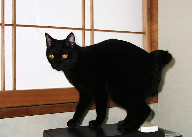 Kazuha0624-2.jpg