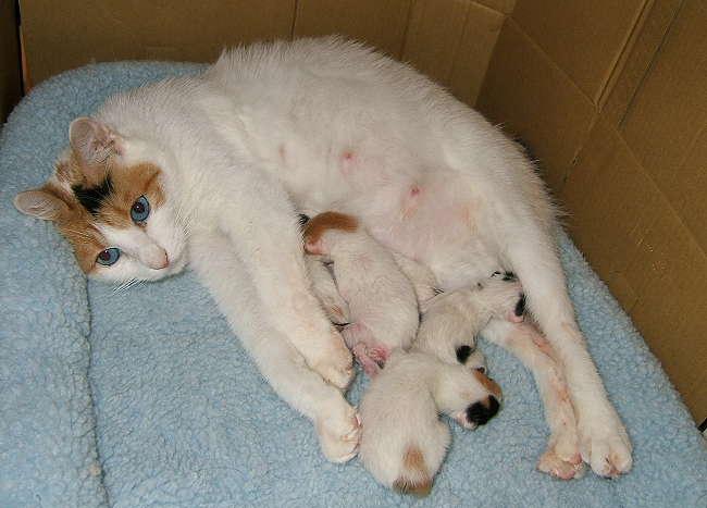 Gutchi-kittens0728-1.jpg