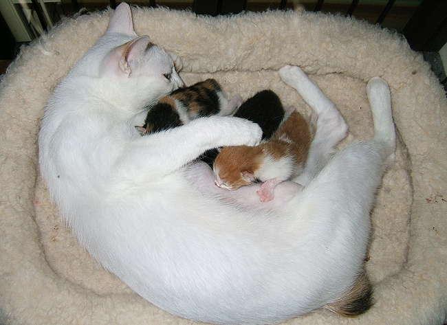 Honoka-kittens0825-1.jpg