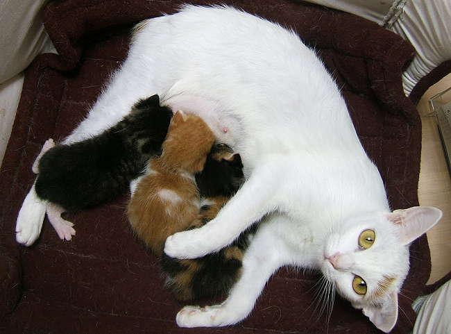 Honoka-kittens0905-1.jpg