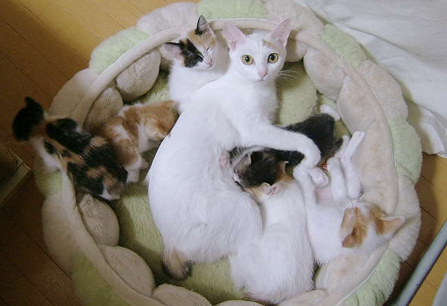 Honoka-kittens0915-1.jpg