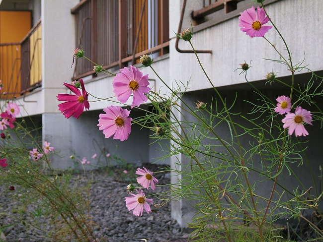 Garden0919-1.jpg