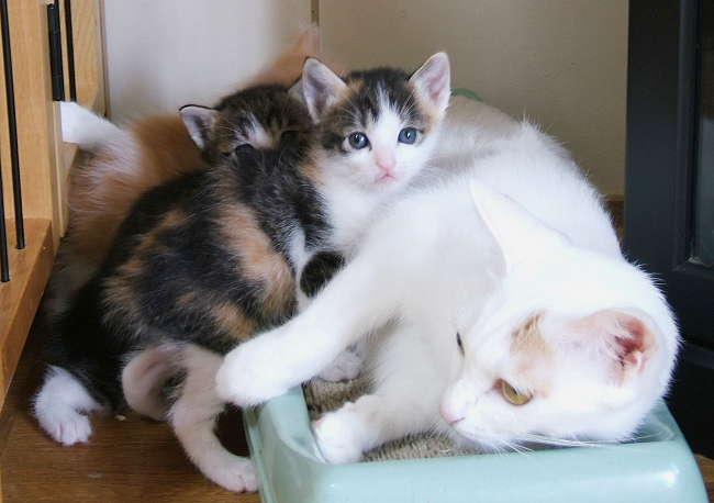 Honoka-kittens0919.jpg