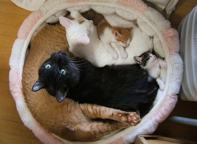 5cats0920.jpg