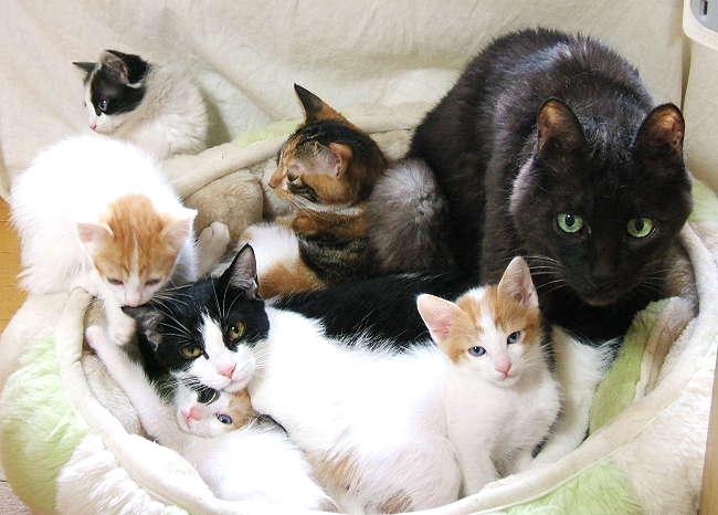 7cats0918.jpg