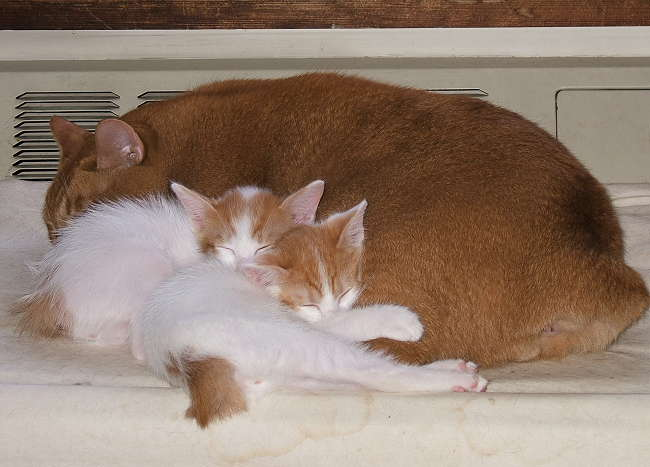 3redcats0920-1.jpg