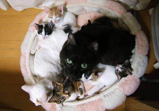 8cats0929.jpg