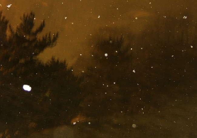 Snow1112.jpg