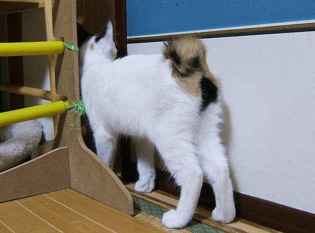 Hanabi1123-3.jpg