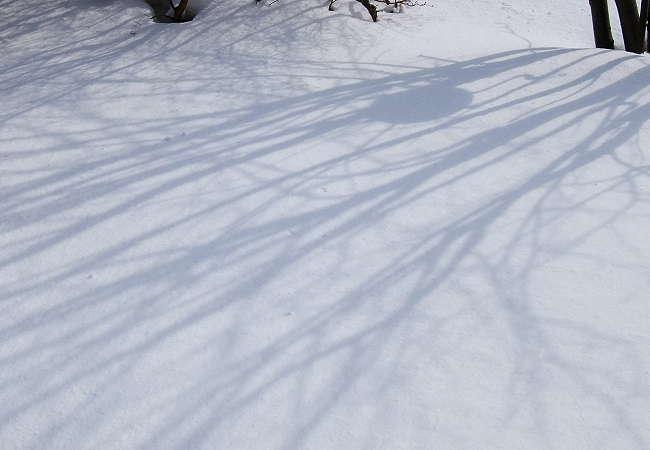 Snow0217-1.jpg
