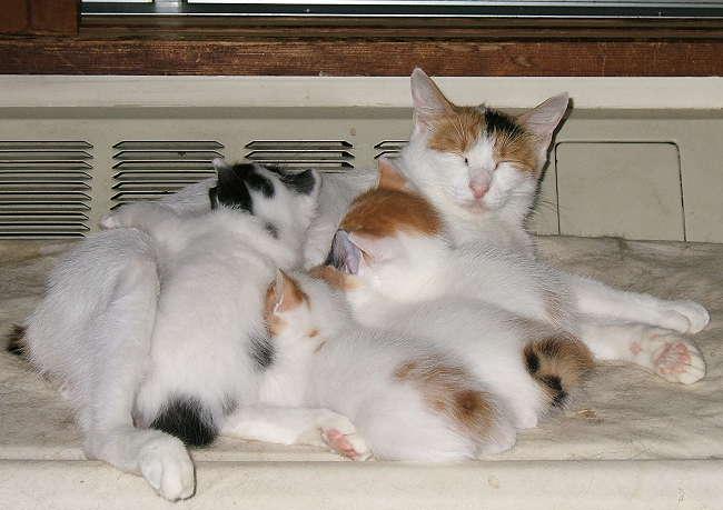 Gutchi-kittens0831.jpg