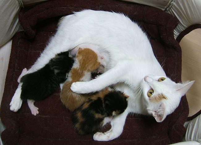 Honoka-kittens0905.jpg