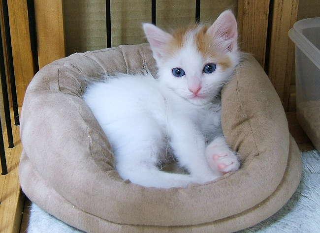 kittenbed1.jpg
