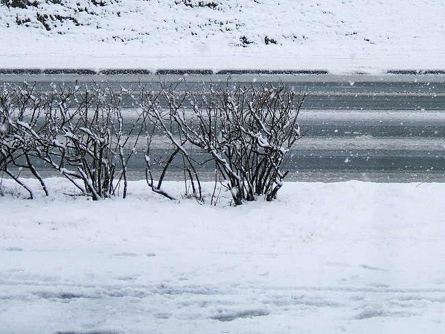 Snow0414-1.jpg