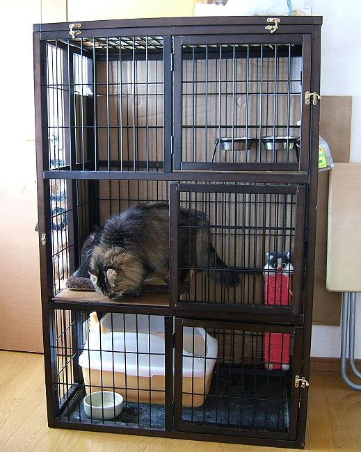 cage0505.jpg