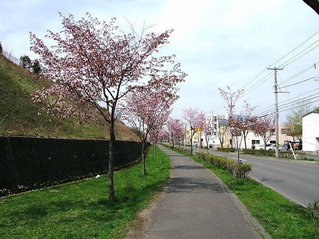 Sakura0512-3.jpg