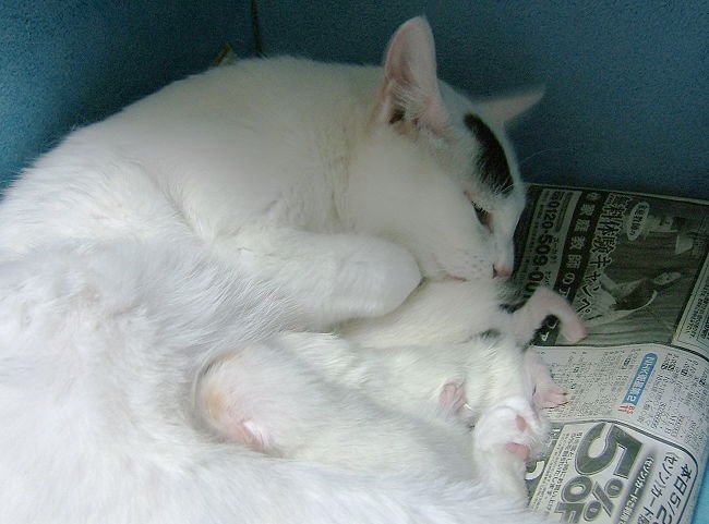 Hokuto-kittens0521.jpg