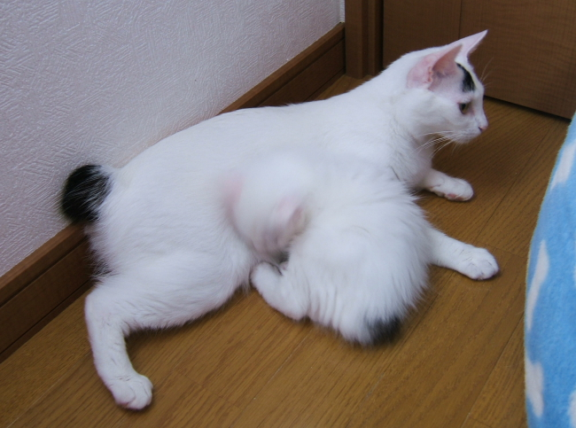 Hokuto-Izumi0702.jpg