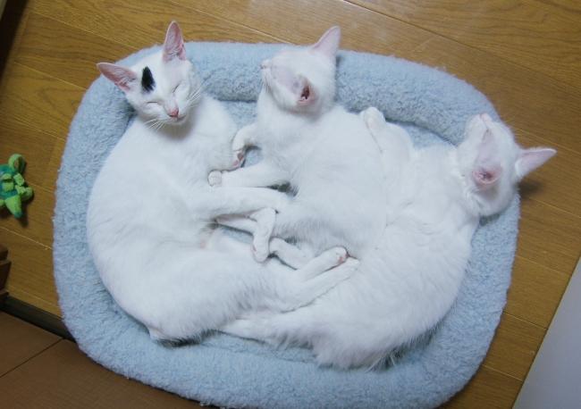 Hokuto-kittens0817.jpg