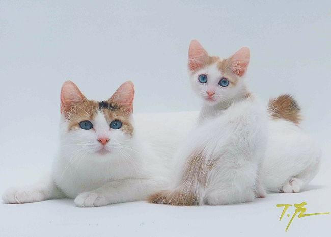 Gutchi-kitten_Fukuda6.jpg