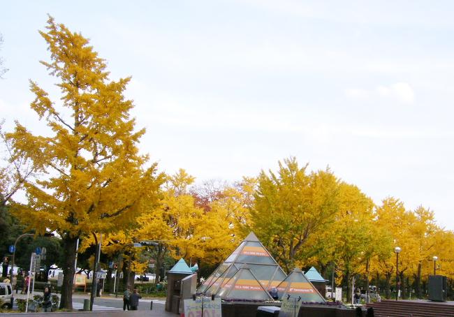 Yokohama1201-1.jpg