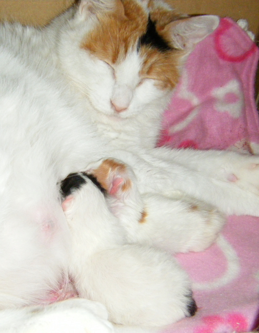 Gutchi-kittens0321-1.jpg