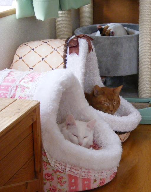 3cats0408.jpg