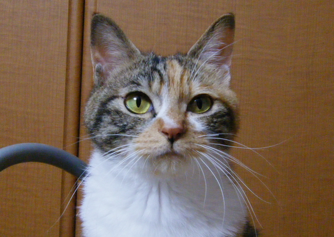 Shizuka0518-1.jpg