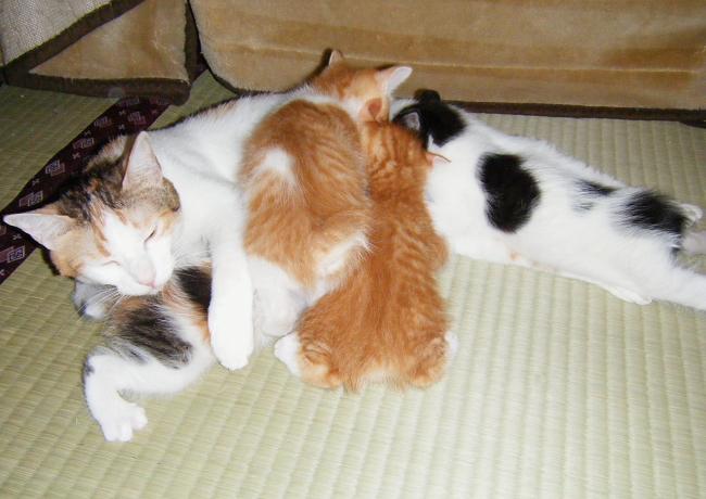 Choko-kittens0524.jpg