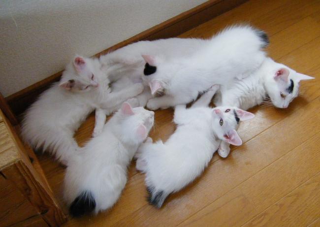 Hokuto-Kittens0615.jpg