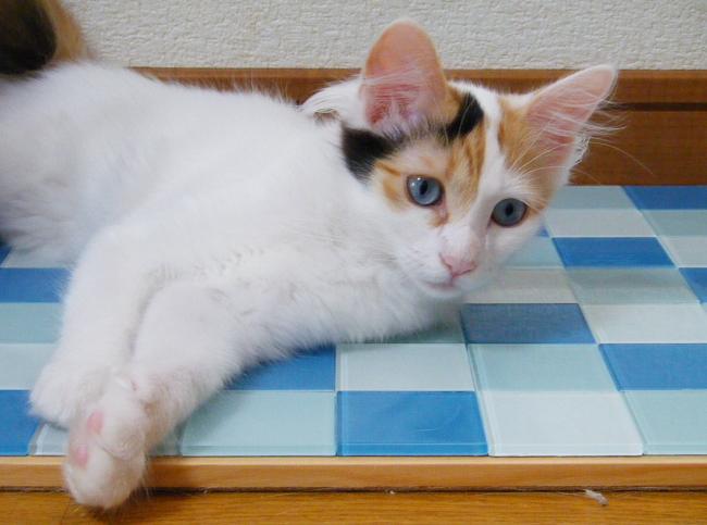 Chitose0715.jpg