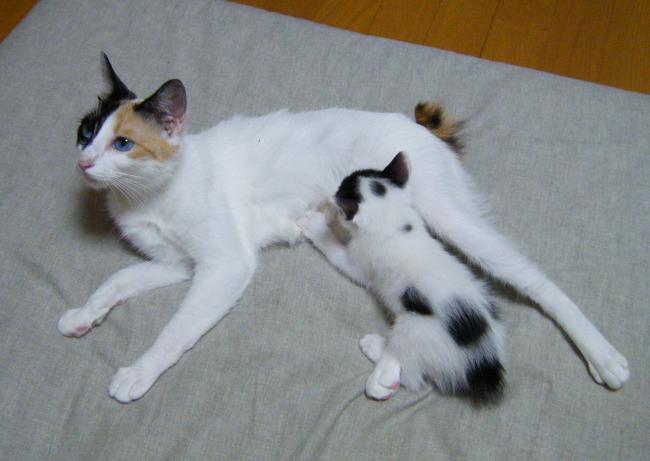 Hanabi-Kagura0726-4.jpg