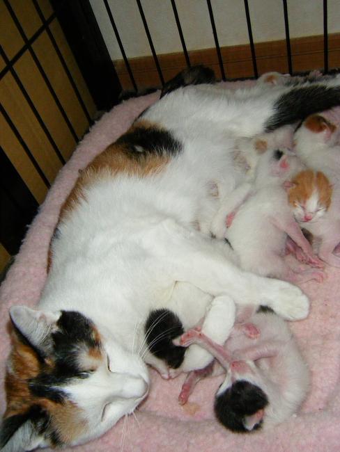 Sakura-Kittens0816.jpg