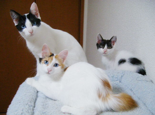 Kittens0825.jpg
