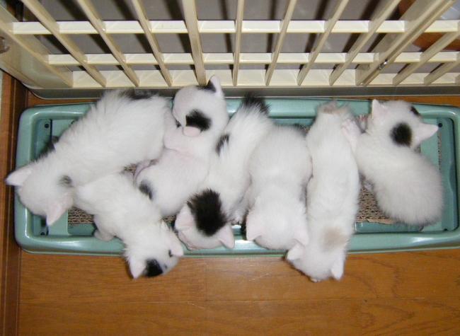 Kittens0906-1.jpg