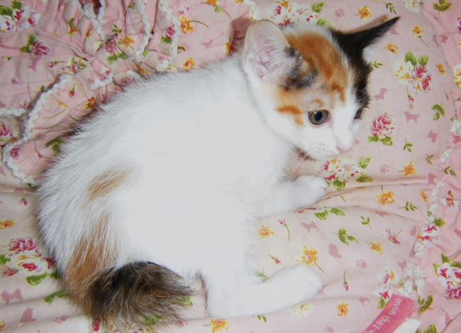 Sakura0925.jpg