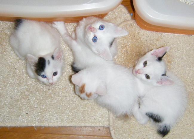 Kittens0925-1.jpg